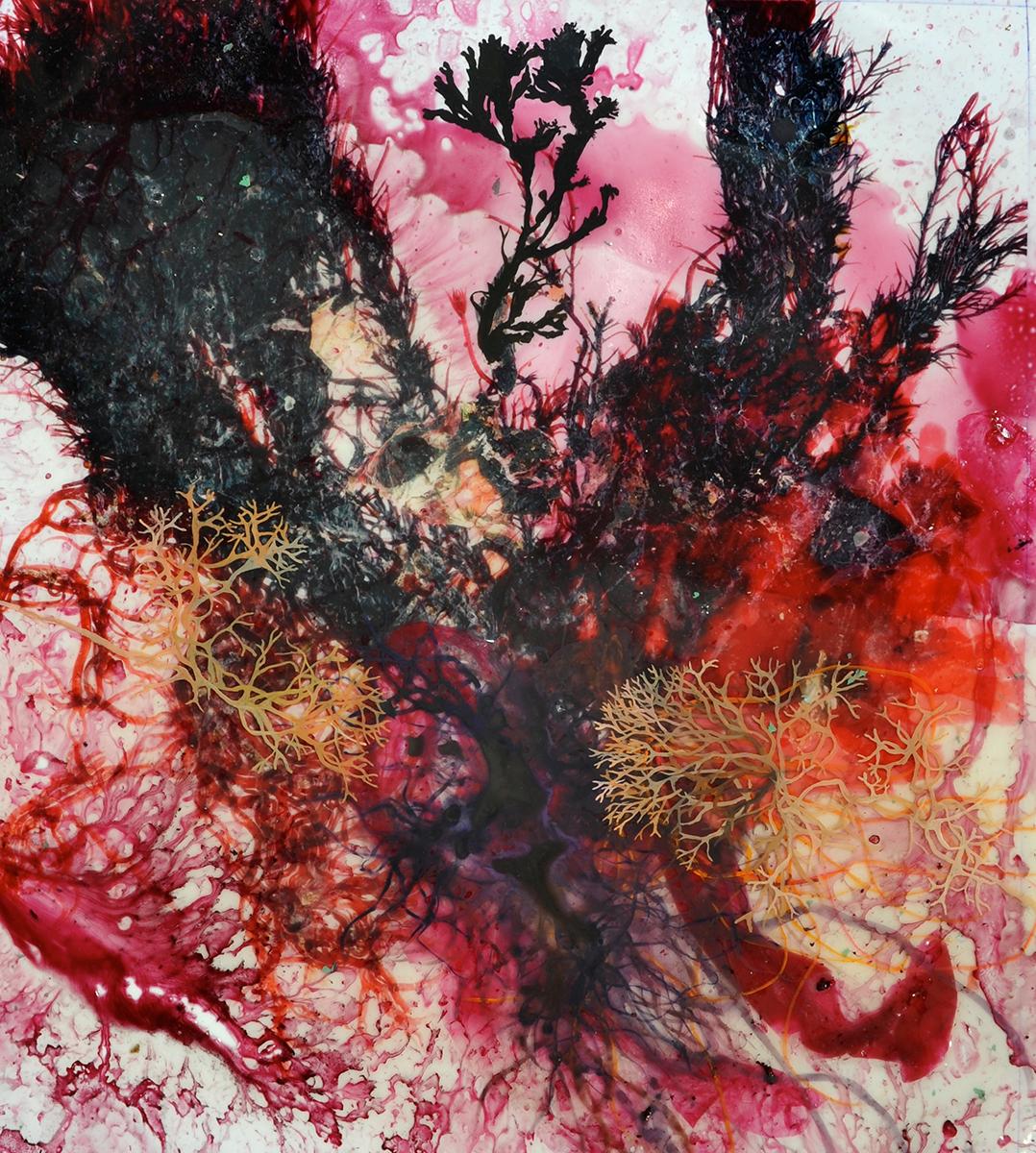 Michael Porter Seaweed 01-12-15